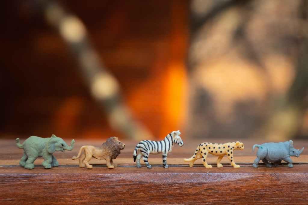 ข้อมูลจำนวนประชากรสัตว์ป่าแต่ละประเภทในพื้นที่ป่าแห่งหนึ่ง