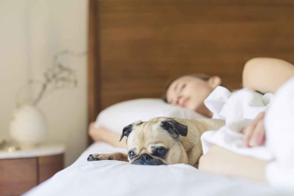 สุนัขนอนกับเจ้าของที่หลับอยู่